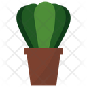 Astrophytum Potted Plant Icon