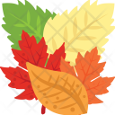 Autumn Leaves Colorful Icon