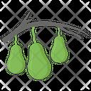 Avocado Plant Icon