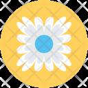Bachelors Button Cornflower Icon