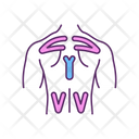 Back Pain Muscle Icon