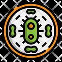 Bacterium Icon