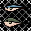 Bait Fish Catch Icon