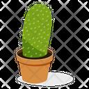 Ball Cactus Plant Icon