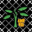 Banana Tree Plant Fruit Icon