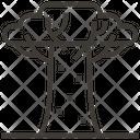Baobab Icon