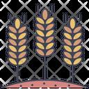 Barley Rice Food Rice Icon