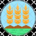 Barley Stalks Icon