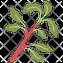 Basil Fresh Herb Icon