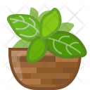 Basil Herbs Seasoning Icon