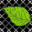 Basil Leaf Leaf Foliage Icon