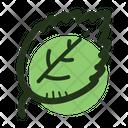 Herb Leaf Spice Icon