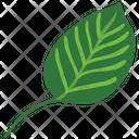 Basil Leaf Icon