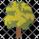 Basswood Odorless Wood Icon
