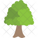 Basswood Tree Icon