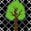 Basswood Tree Odorless Icon