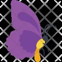 Battus Belus Side View Icon