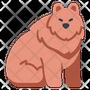Animal Bear Big Icon