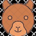 Bear Wild Animal Mammal Icon