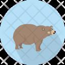 Bear Big Animal Icon