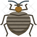 Bedbug Animals Insects Icon