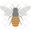 Bug Fly Bee Icon