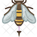 Bee Insect Pang Icon