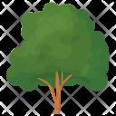Beech Tree Icon