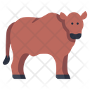 Beef Cow Cow Animal Icon