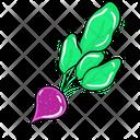 Vegetable Food Beet Icon