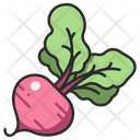 Vegetable Beet Root Icon