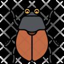 Beetle Insect Bug Icon