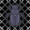 Beetle Animal Icon