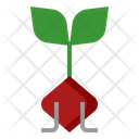 Beetroot Plant Sprout Icon