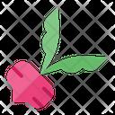 Beetroot Beet Radish Icon