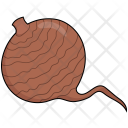 Beetroot Food Vegetables Icon