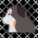 Bernese Mountain Icon
