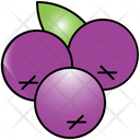 Berries Berry Rainforest Icon