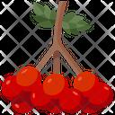 Viburnum Fruit Juicy Vegan Icon