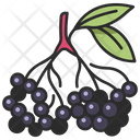 Fruit Vegan Berry Icon