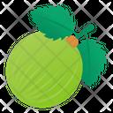 Berry Fruit Indian Gooseberry Icon