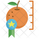 Best Fruit Better Quality Fruit Icon