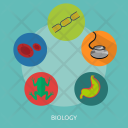 Biology Frog Organ Icon