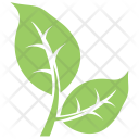 Bipartite Leaf Icon