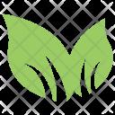 Bipartite Leaf Icon