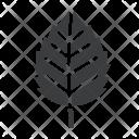 Birch Nature Leaf Icon