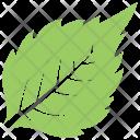 Birch Plant Tree Icon