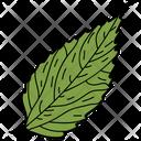 Birch Leaf Leaf Foliage Icon