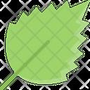 Birch Leaf Foliage Leaf In Fall Icon