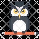 Bird Education Experience Icon